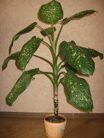 Домашние ядовитые цветы фото – 10 самых опасных комнатных растений 🚩 растения опасные для человека 🚩 Цветоводство