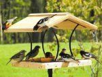 Кормушка для птиц фото из дерева – фото оригинальных идей из дерева, пластиковой бутылки, коробки, пакета, с видео и чертежами