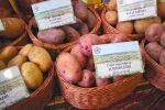 Бизнес картофельный – Выращивание картофеля как бизнес — инструкция пошагово!