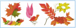 Фигурка или узор из опавших листьев – Окружающий мир 1 кл Какой узор или фигурку составить из опавших листьев?