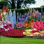 Клумба красивая – Как начинающим сделать своими руками красивые клумбы на даче из многолетников: виды и фото цветников